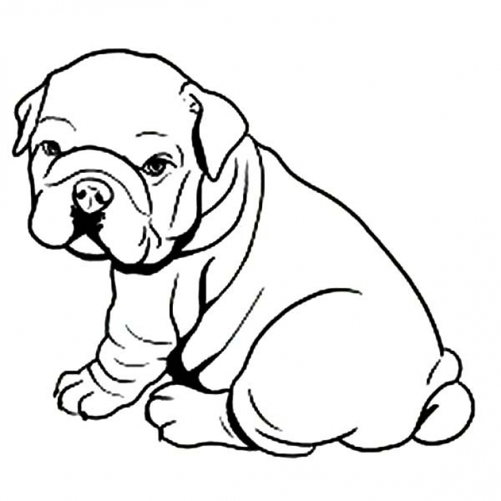 English Bulldog coloring #5, Download drawings