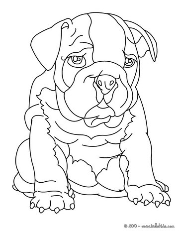 English Bulldog coloring #8, Download drawings