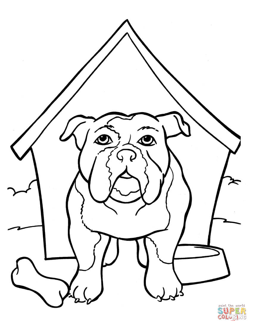 English Bulldog coloring #4, Download drawings