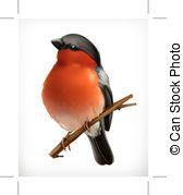 Bullfinch clipart #12, Download drawings