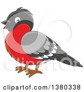 Bullfinch clipart #7, Download drawings