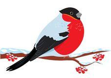 Bullfinch clipart #19, Download drawings
