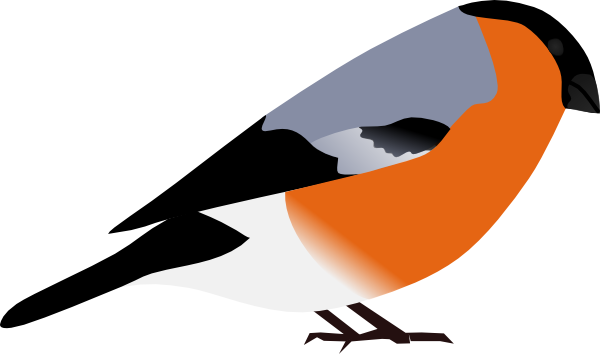 Bullfinch clipart #16, Download drawings