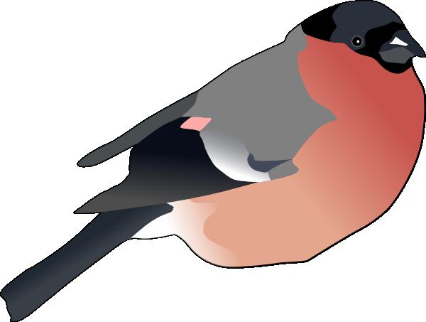 Bullfinch clipart #13, Download drawings