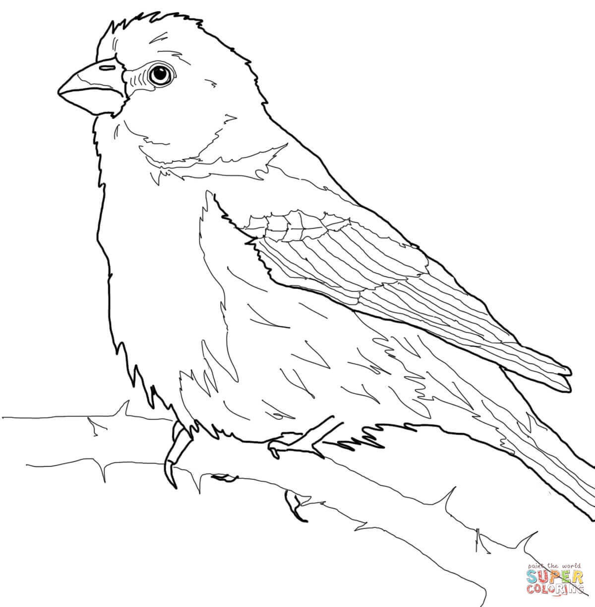Finch coloring #4, Download drawings