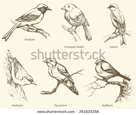 Bullfinch svg #6, Download drawings