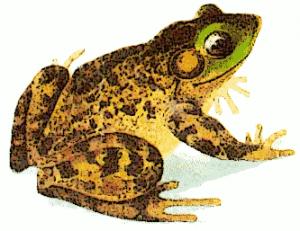 Bullfrog clipart #19, Download drawings