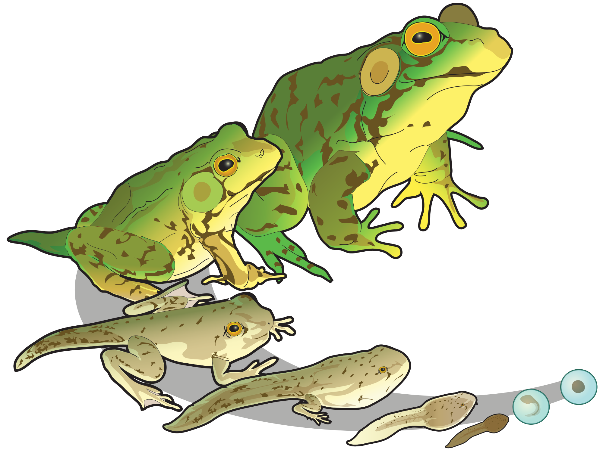 Tree Frog svg #3, Download drawings