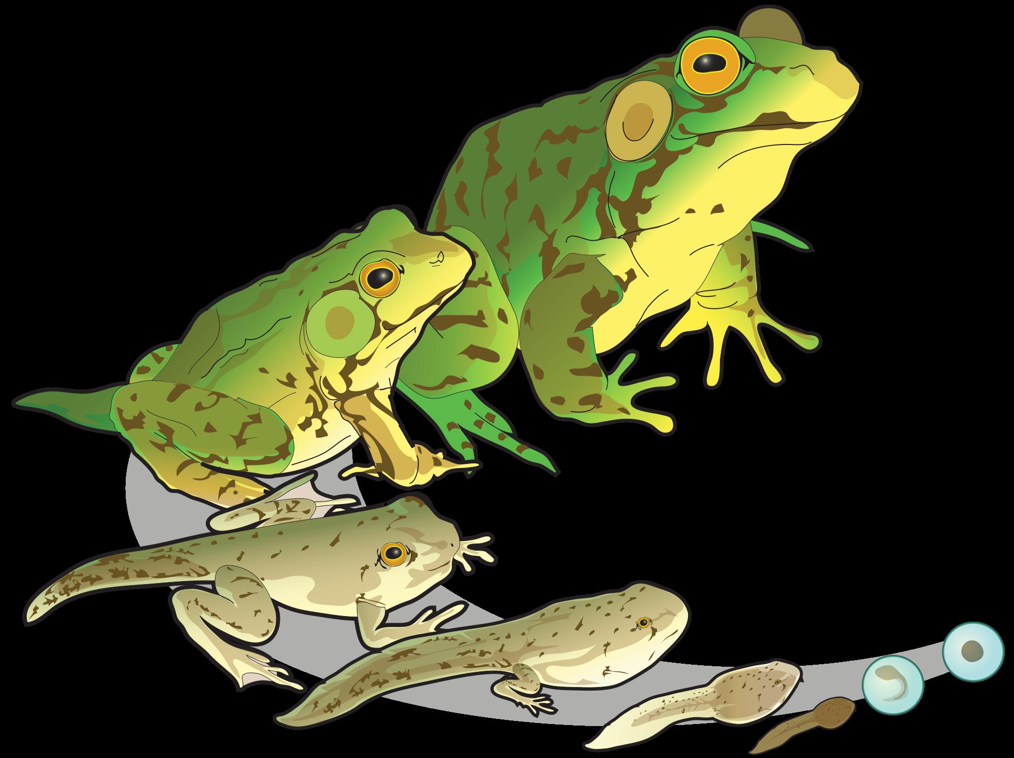 Bullfrog svg #14, Download drawings