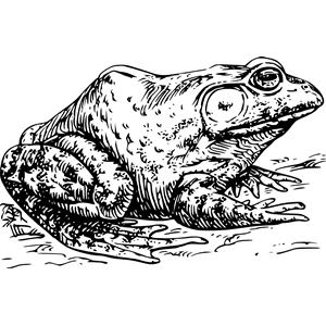 Bullfrog svg #20, Download drawings