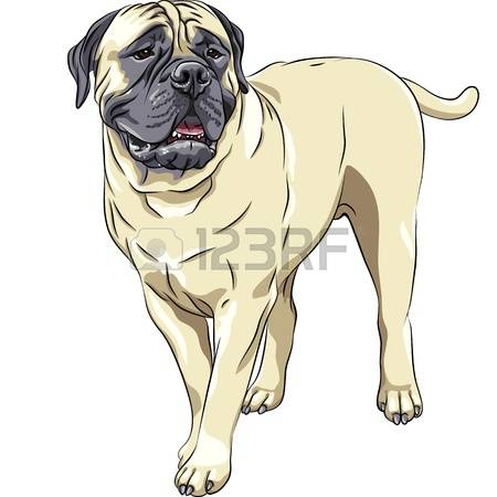 Bullmastiff clipart #1, Download drawings