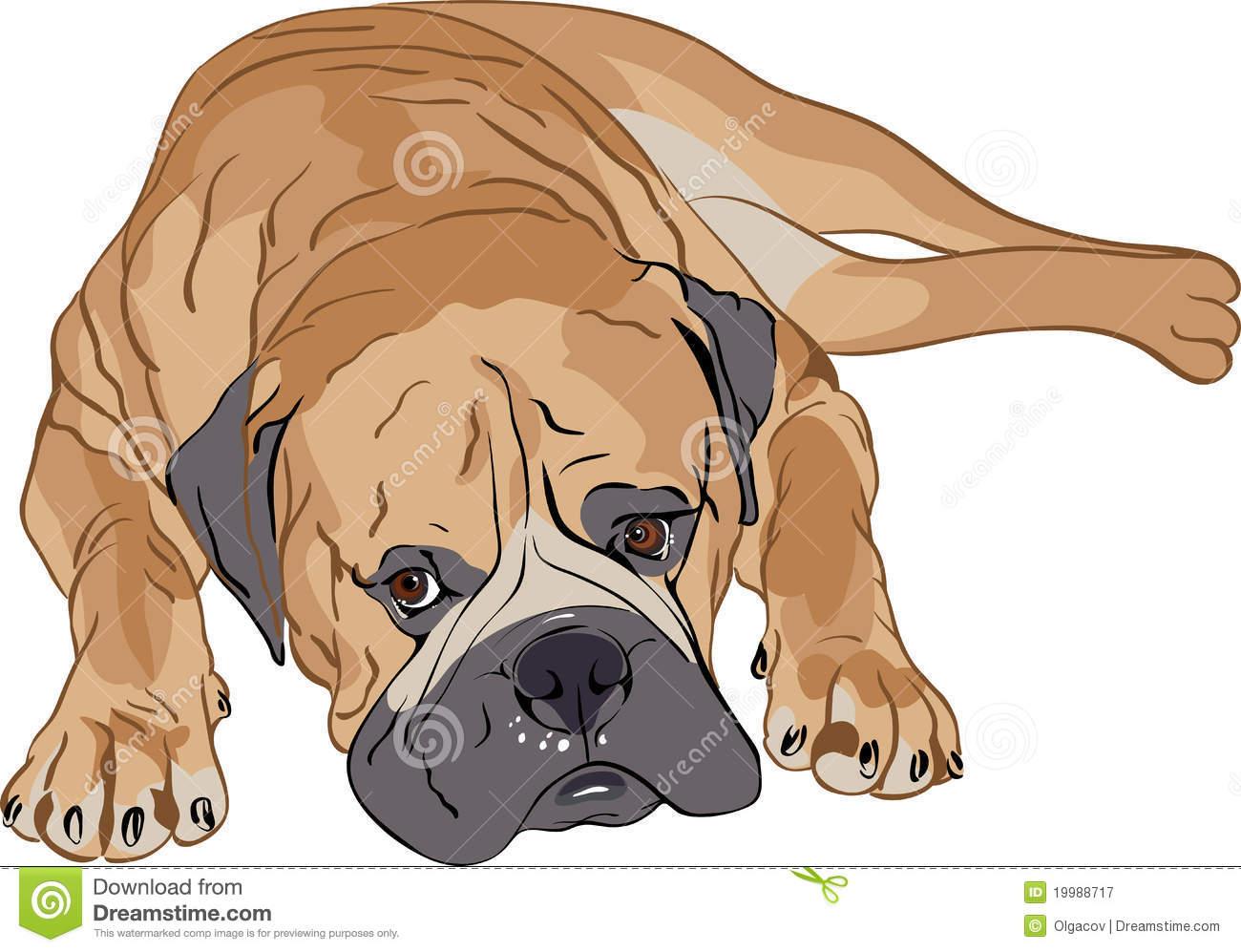 Bullmastiff clipart #14, Download drawings