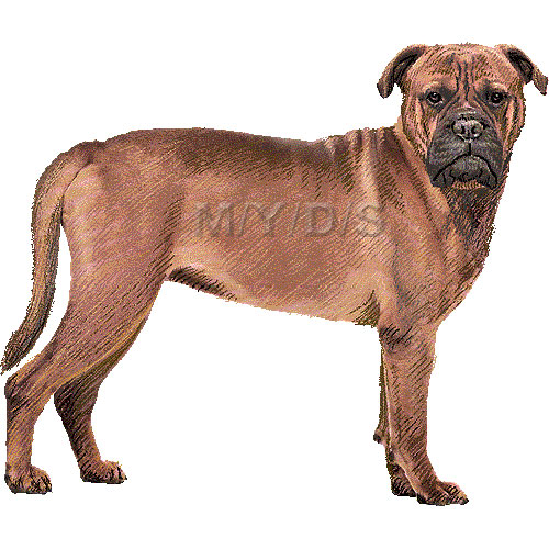 Bullmastiff clipart #19, Download drawings