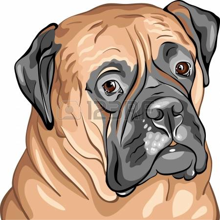 Bullmastiff clipart #9, Download drawings