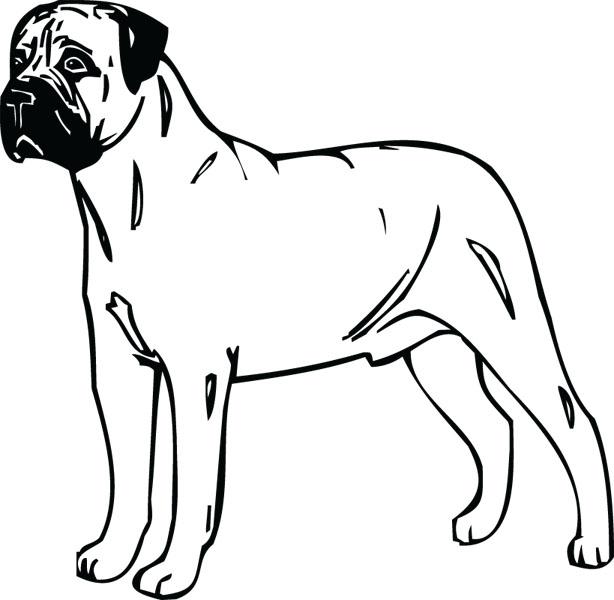 Bullmastiff clipart #4, Download drawings