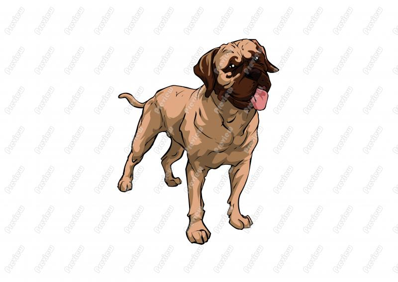 Bullmastiff clipart #3, Download drawings