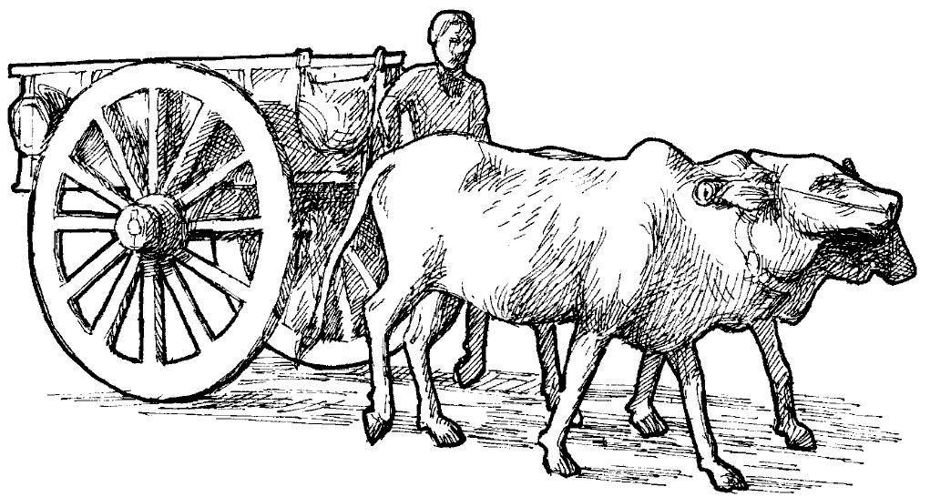 Bullock clipart #4, Download drawings