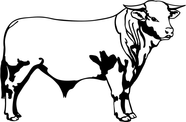 Bulls clipart #6, Download drawings