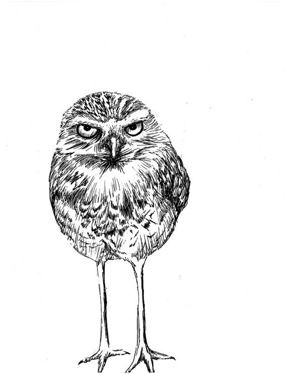 Burrowing Owl clipart #11, Download drawings