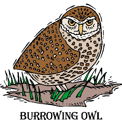 Burrowing Owl clipart #6, Download drawings
