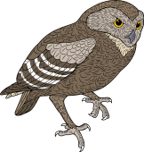 Burrowing Owl clipart #2, Download drawings