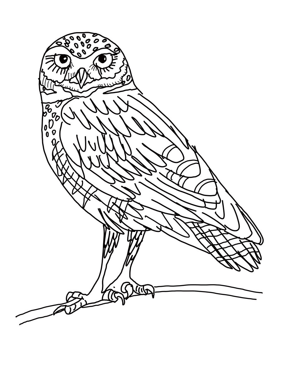 Burrowing Owl clipart #9, Download drawings