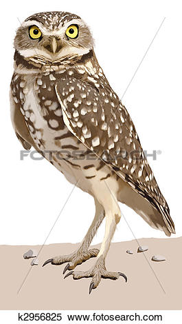 Burrowing Owl clipart #3, Download drawings