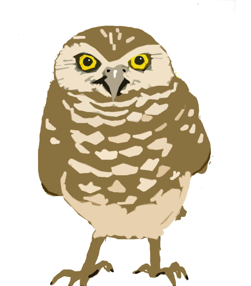 Burrowing Owl clipart #5, Download drawings
