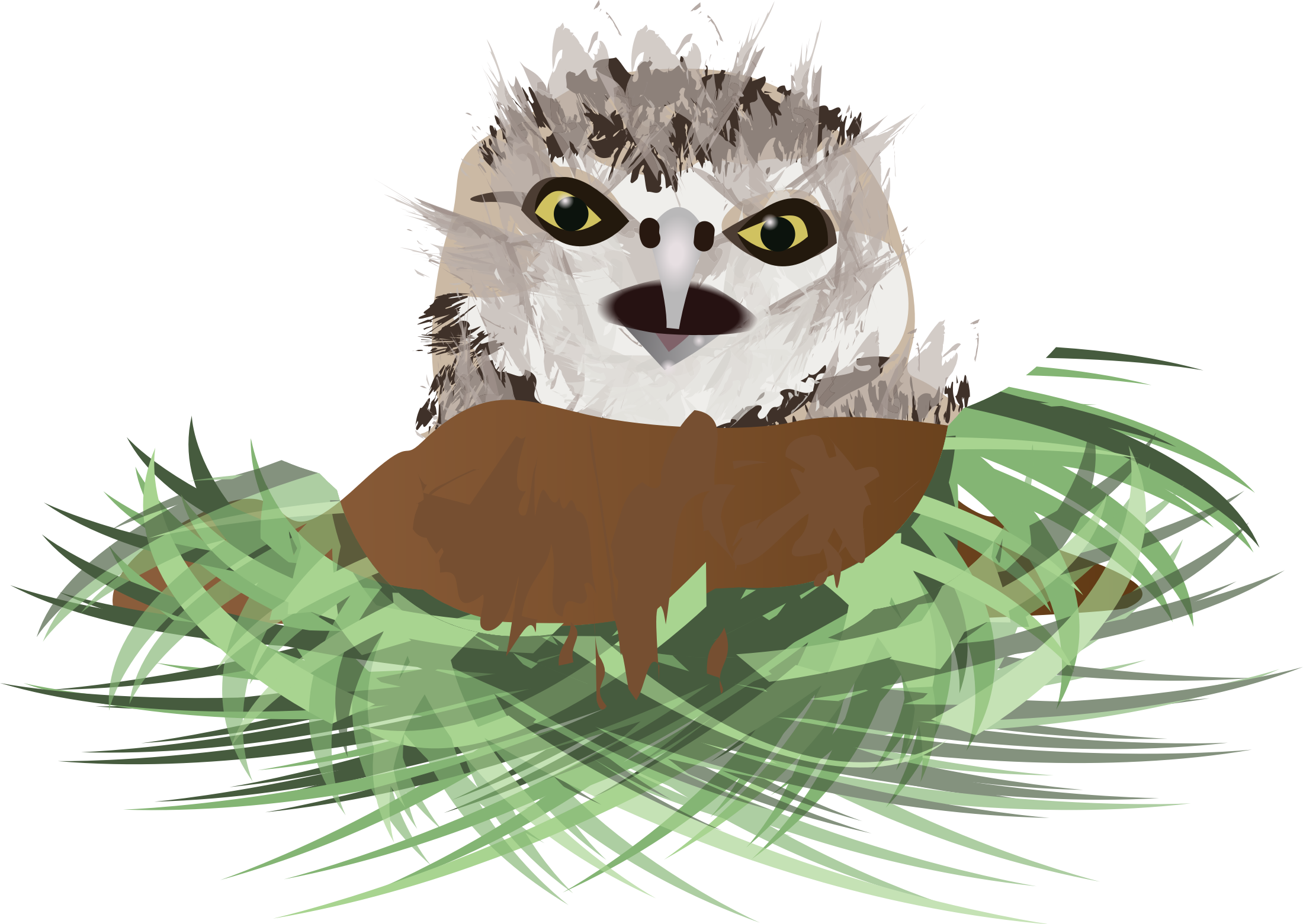 Burrowing Owl clipart #17, Download drawings