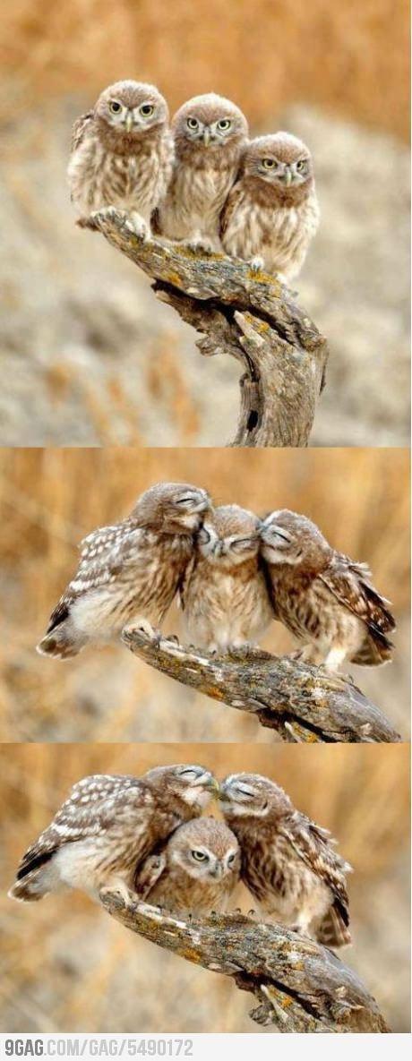 Burrowing Owl svg #1, Download drawings