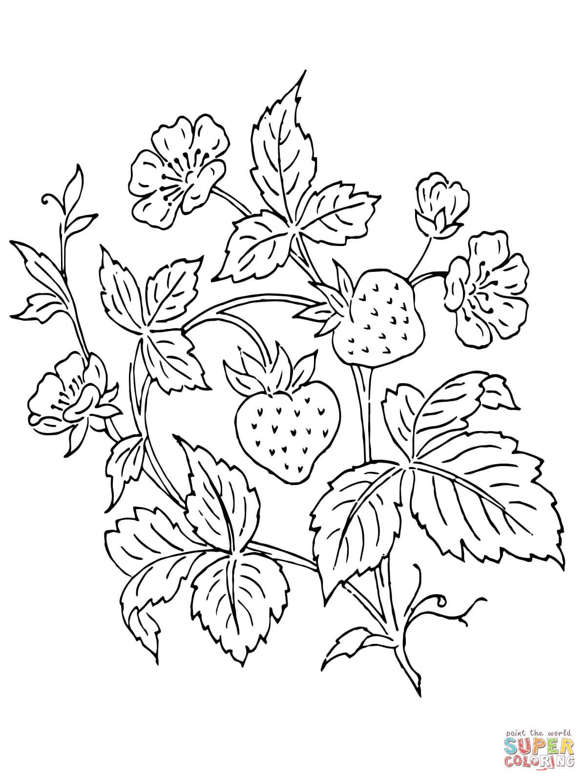 Bush coloring #2, Download drawings