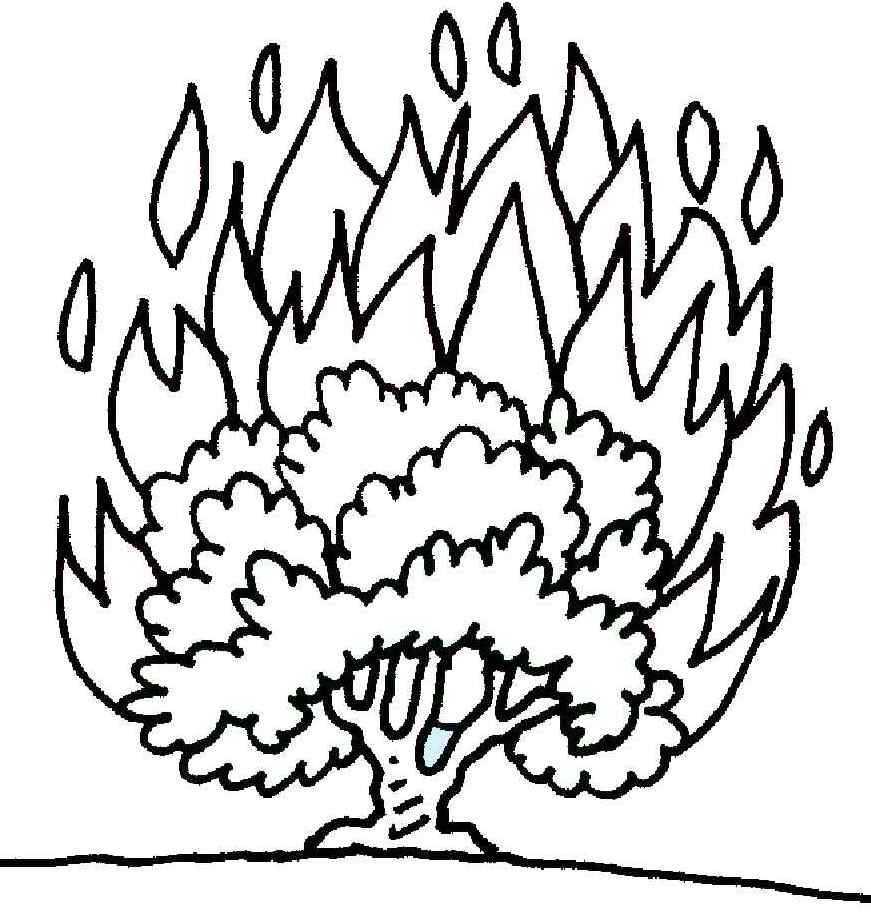 Bush coloring #17, Download drawings
