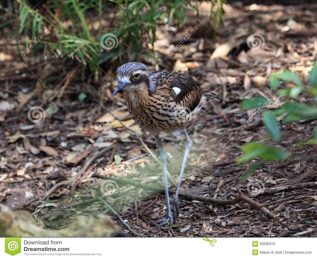 Bush Stone-curlew clipart #6, Download drawings
