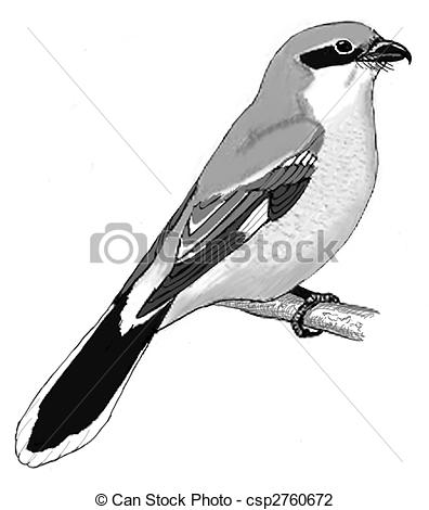 Butcherbird clipart #2, Download drawings
