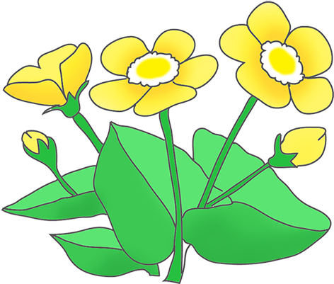 Buttercup clipart #17, Download drawings