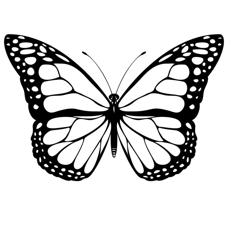 Butterfly clipart #16, Download drawings