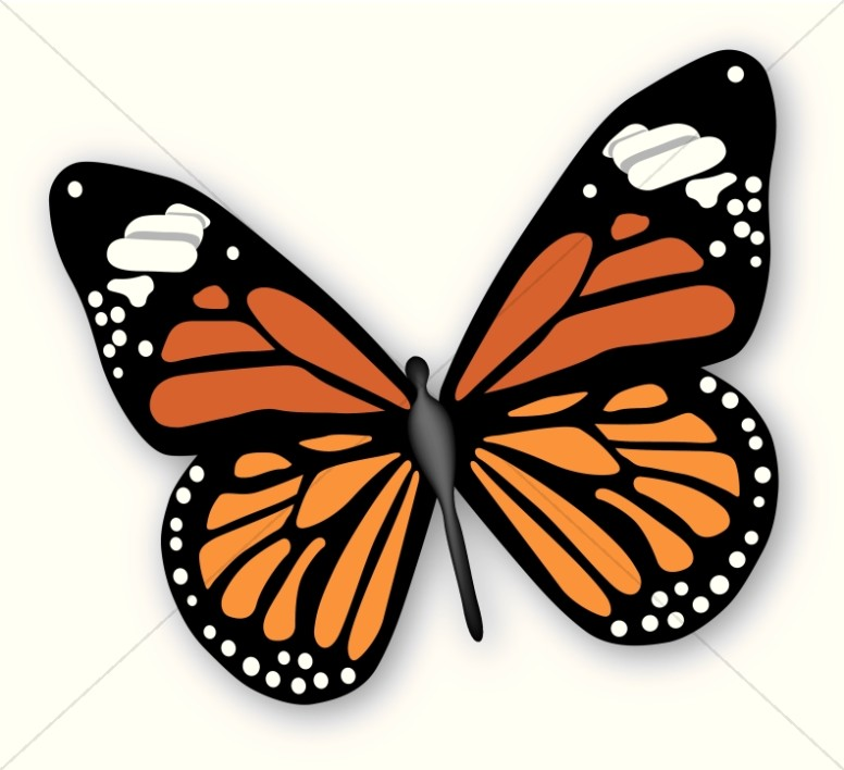 Butterfly clipart #7, Download drawings