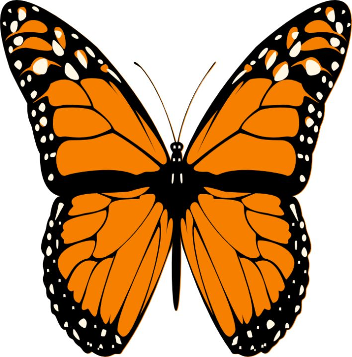 Butterfly clipart #2, Download drawings