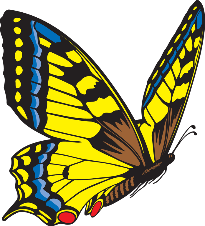 Butterfly clipart #3, Download drawings