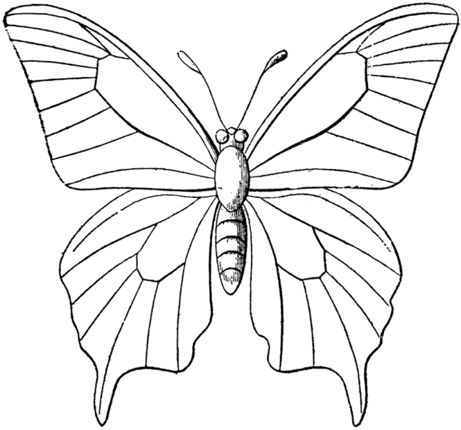Butterfly coloring #4, Download drawings