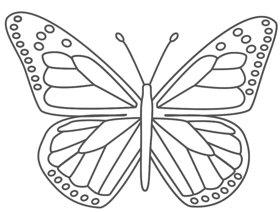 Butterfly coloring #16, Download drawings