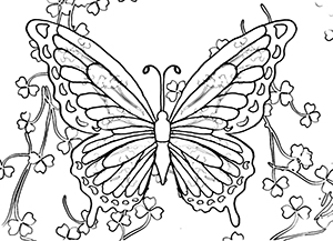 Butterfly coloring #10, Download drawings