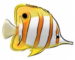 Butterflyfish clipart #13, Download drawings