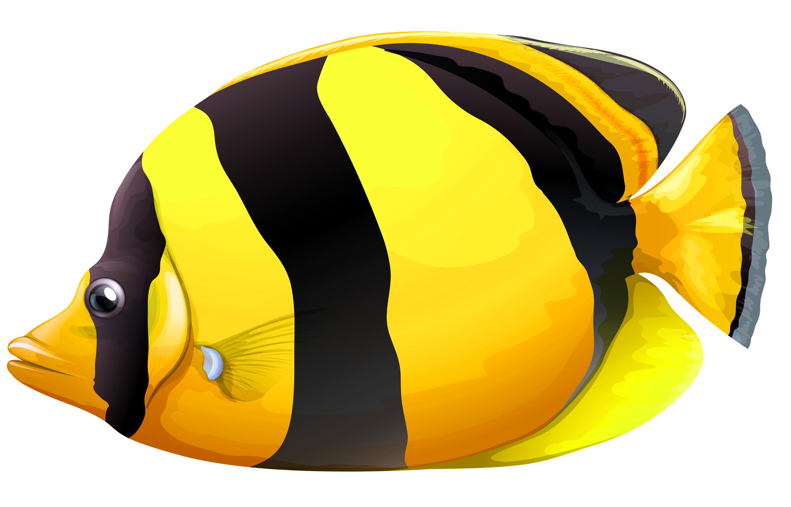 Butterflyfish clipart #3, Download drawings