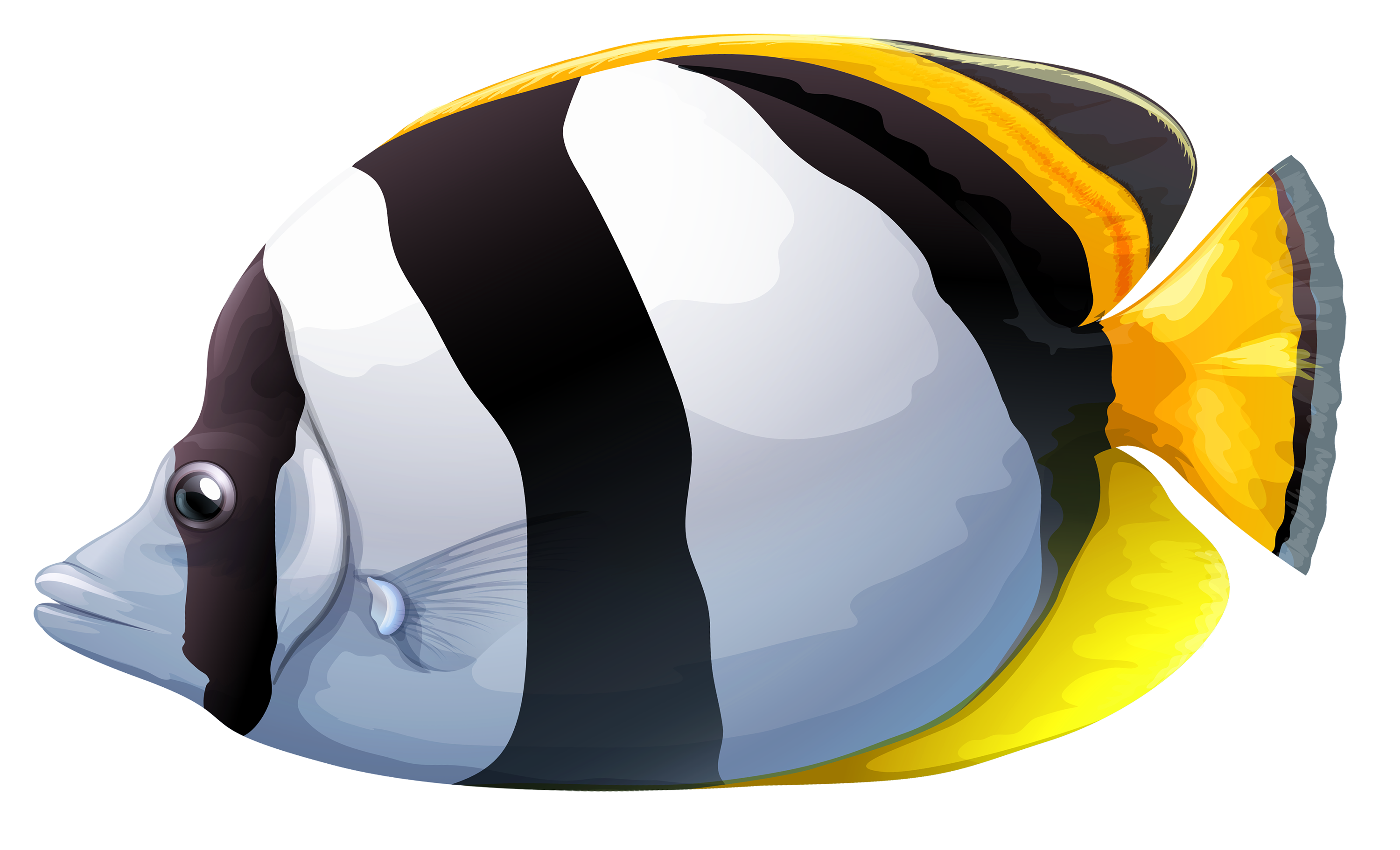 Butterflyfish clipart #4, Download drawings