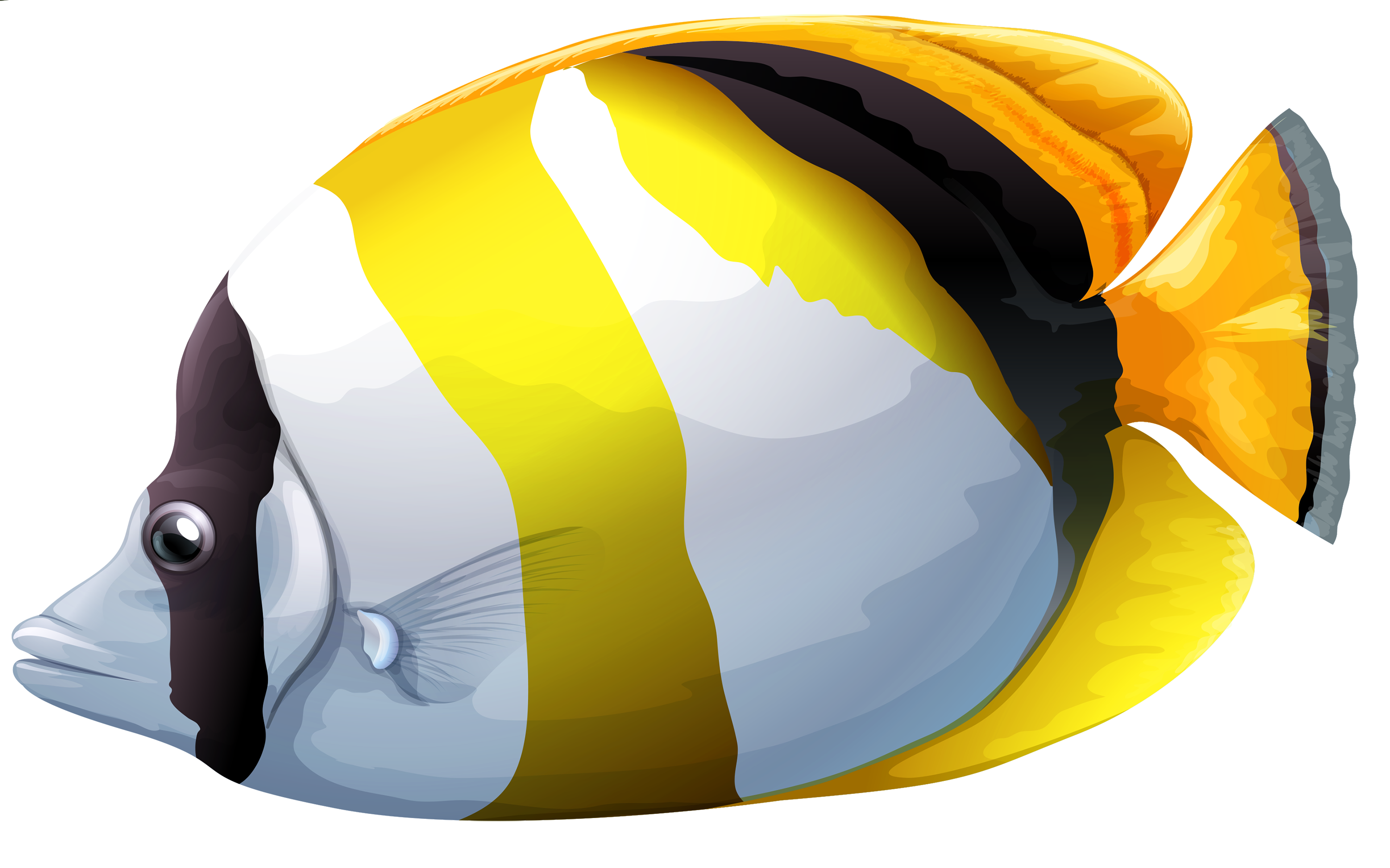 Butterflyfish clipart #2, Download drawings