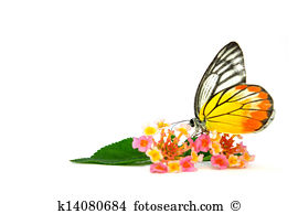 Butterweed clipart #11, Download drawings