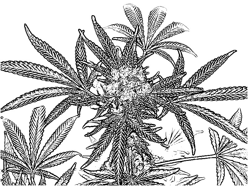 Cannabis coloring #19, Download drawings