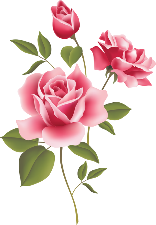 Cabbage Rose clipart #14, Download drawings