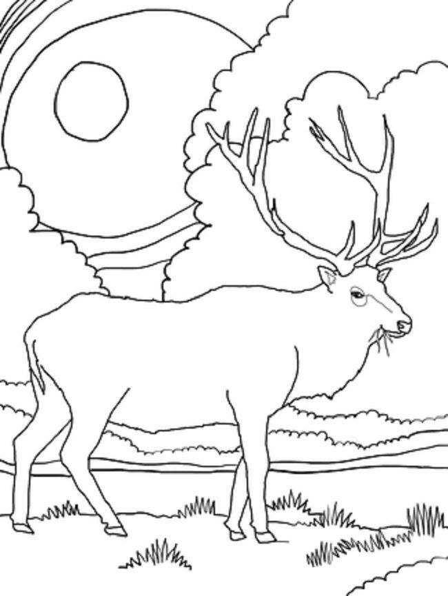 Cape Breton coloring #20, Download drawings